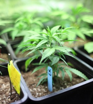 Drought Restrictions for California Pot Growers