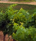 Major infrastructure completed for Temecula Wine Country